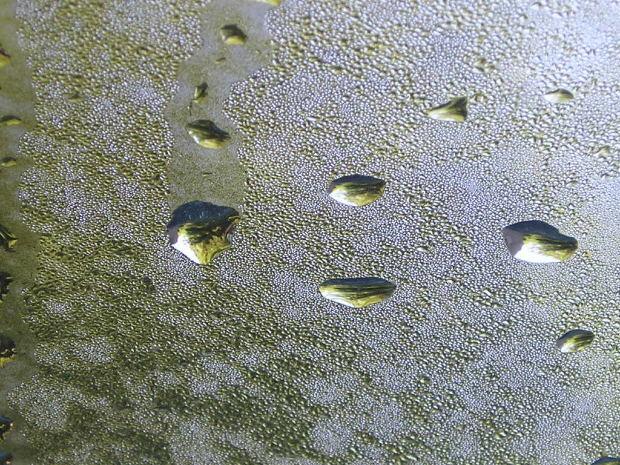 La huella hídrica y su importancia para el cuidado del medio ambiente