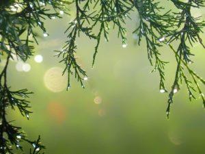 En Navidad, también podemos ser ecológicos