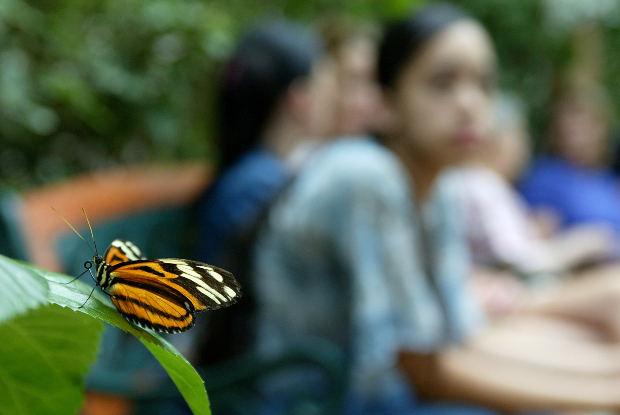 Mariposa posada y observada por una niña