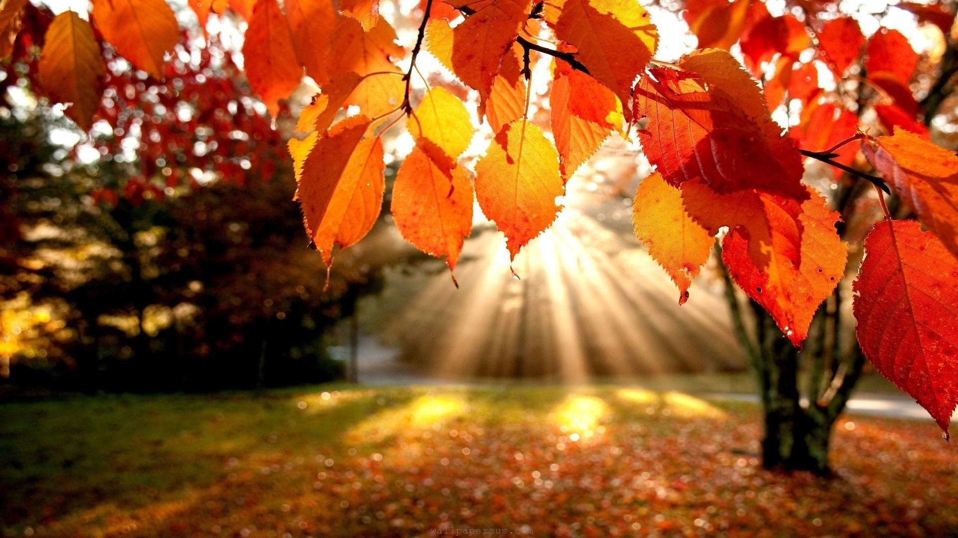 Consejos saludables para el otoño