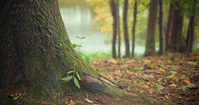 Día Internacional de la Madre Tierra: La importancia de los árboles